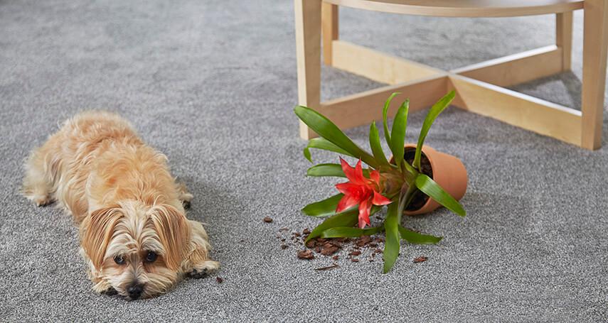 Coles Fine Flooring   carpet care