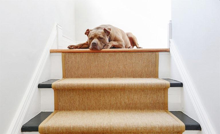 Coles Fine Flooring | Stair Runners