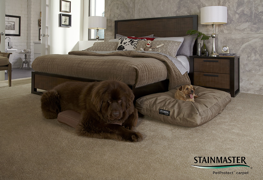 Coles Fine Flooring | keeping your pets safe during the holidays
