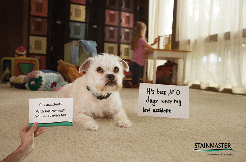 Coles Fine Flooring | Stainmaster PetProtect Carpet