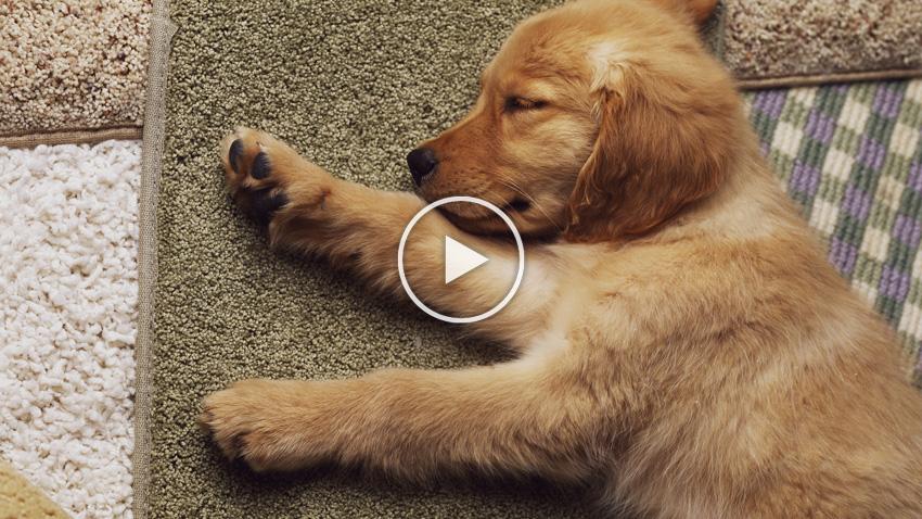 Coles Fine Flooring | Carpet that lasts video
