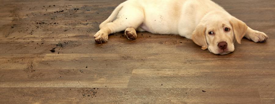 Coles Fine Flooring | Vinyl care