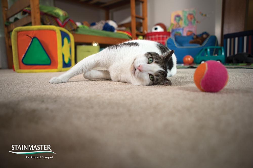 Coles Fine Flooring | StainMaster PetProtect