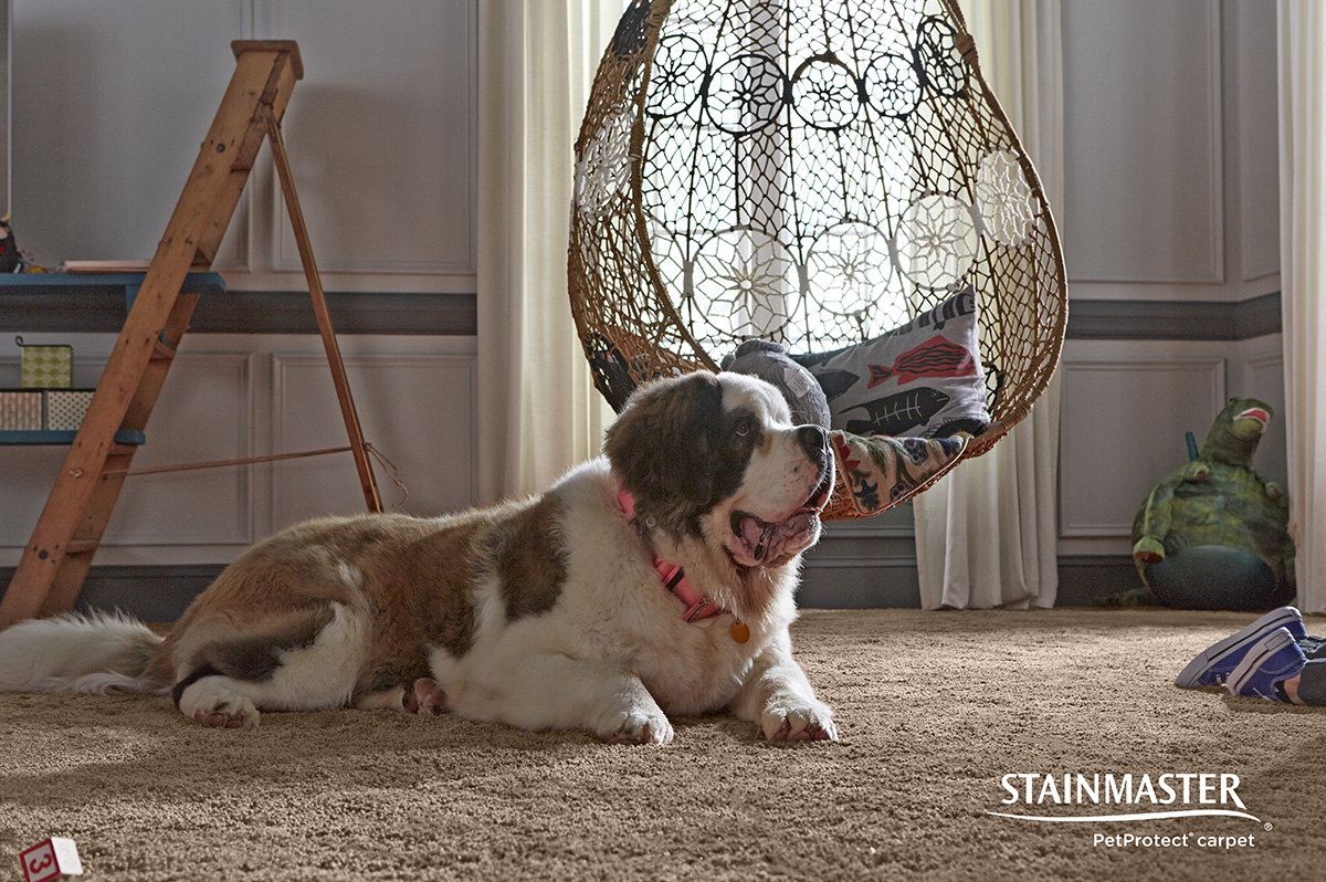 Pet Friendly Carpet From Stainmaster 174 Coles Fine Flooring