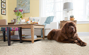STAINMASTER® PetProtect® carpet