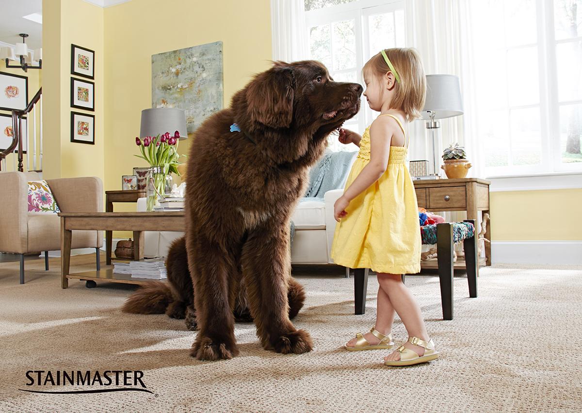 Coles Fine Flooring | stainmaster petprotect carpet