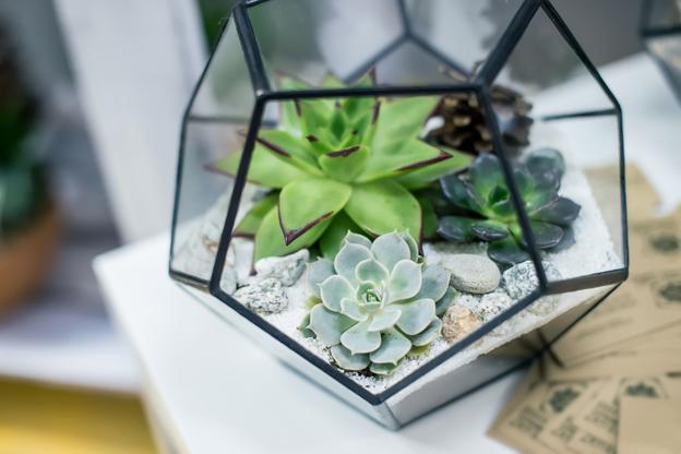 Coles Fine Flooring   indoor plants