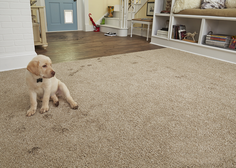 Coles Fine Flooring | pet-friendly decorating