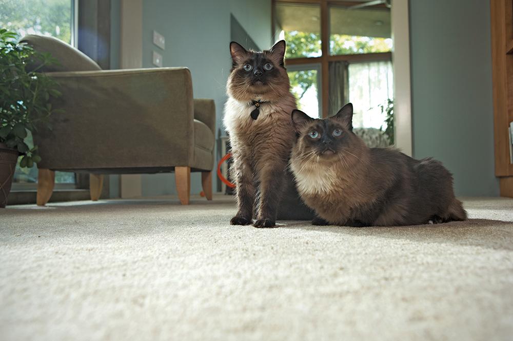 Coles Fine Flooring | san diego humane society kitten nursery
