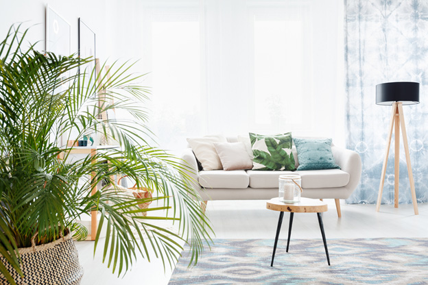 Coles Fine Flooring | Decorating with Plants