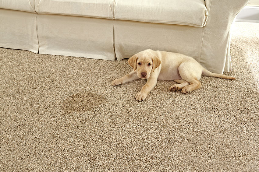 Coles Fine Flooring | Nylon vs Polyester carpet