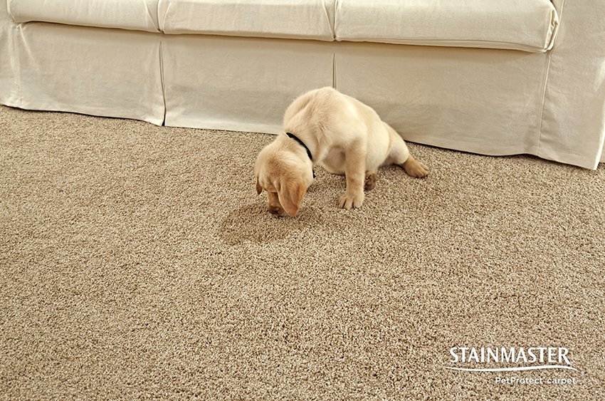 Coles Fine Flooring | Cleaning up After Your Pet