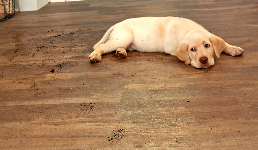 Coles Fine Flooring | Wood Look Ceramic Tile